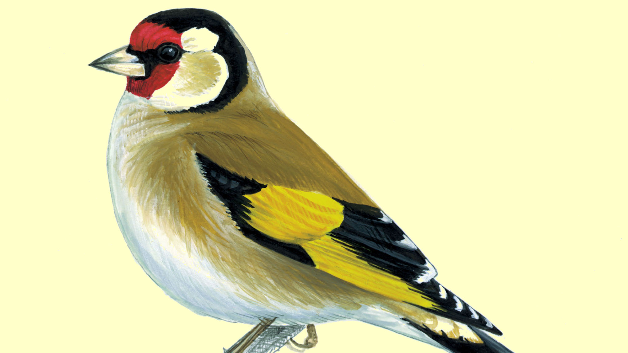 A Charm Of Goldfinches Roaringwater Journal