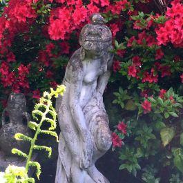 Glimpsed amid the foliage
