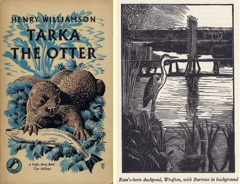 A 'Tarka' edition illustrated by Tunnicliffe