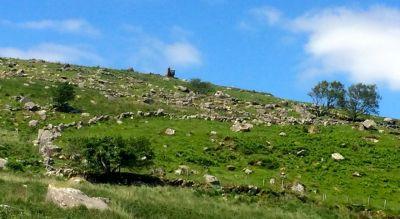 The digger at Derrynablaha