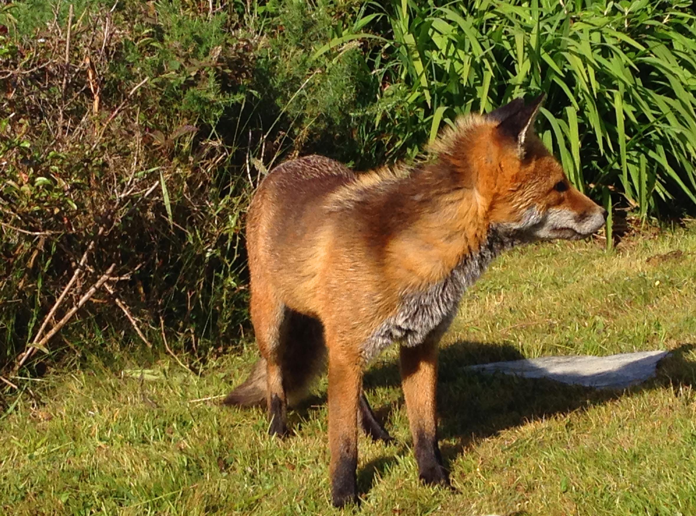 Ferdia - our garden companion