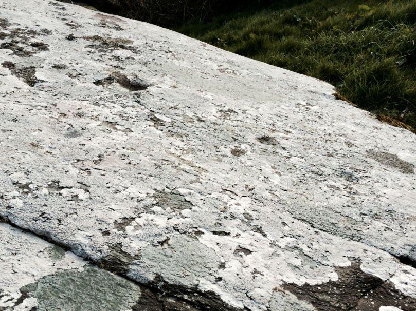 Under all that lichen lie many cupmarks