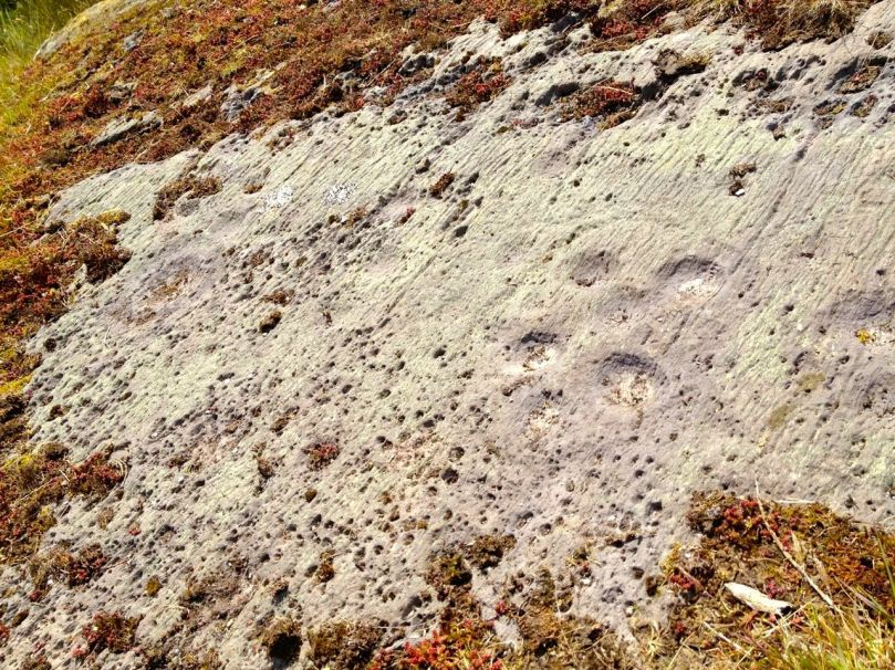 Benign neglect - rock art in a cow field