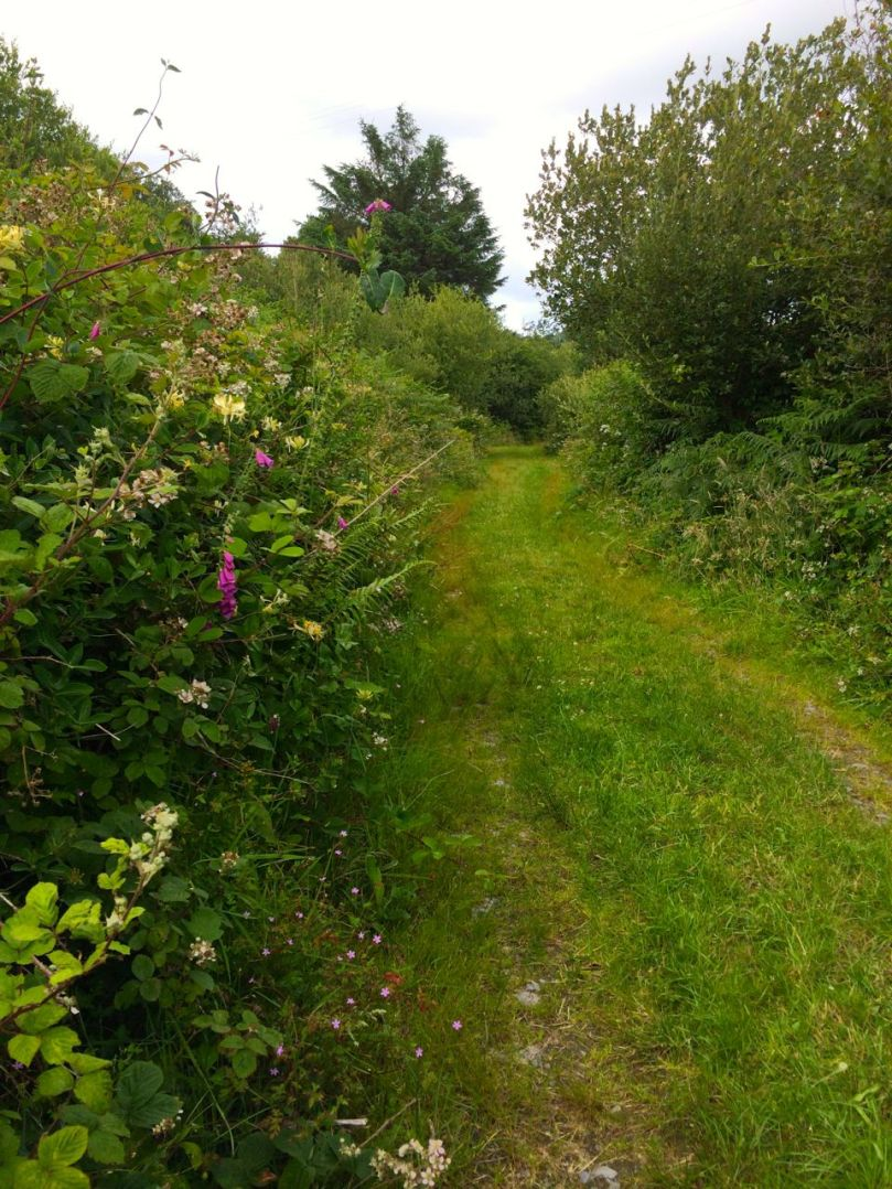 The old Butter Road runs between Schull and Ballydehob