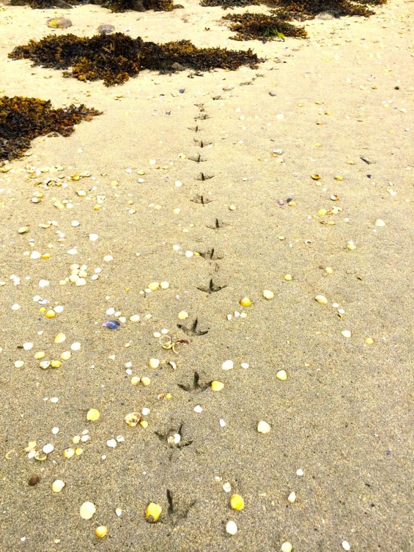 Heron tracks