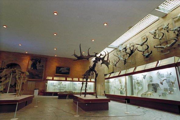 Irish Elk Roaringwater Journal