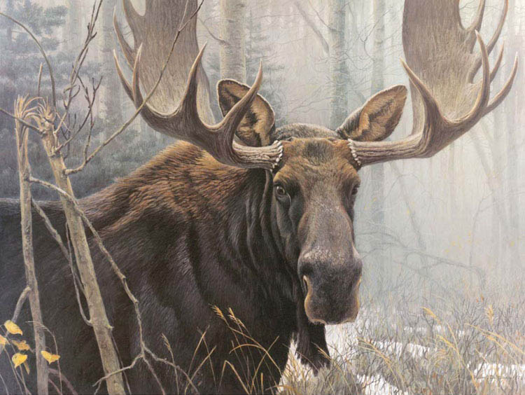Closest relation: Canadian Bull Moose (Robert Bateman)