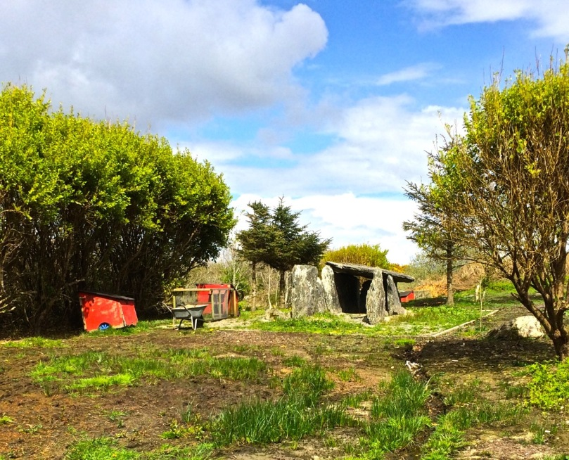Toormore wedge tomb,  now in someone's garden