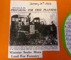 The forest dates from 1959