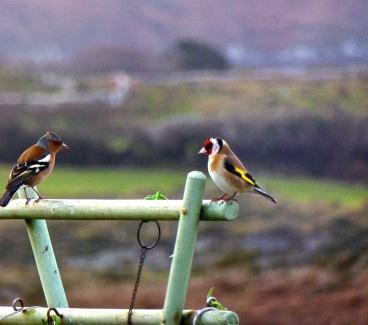 2 more birds