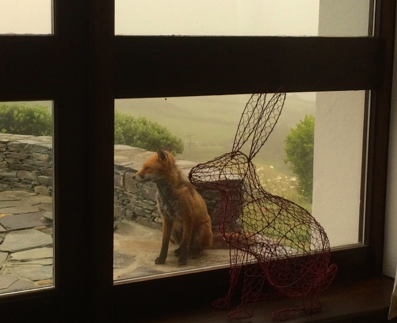 Seen through the window: a bedraggled Ferdia posing with one of our many household Hares!