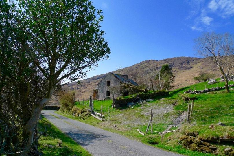 The old O'Sullivan farmstead returning to nature