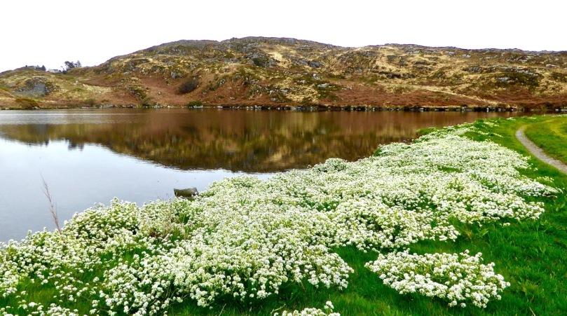 Lake Farranamanagh