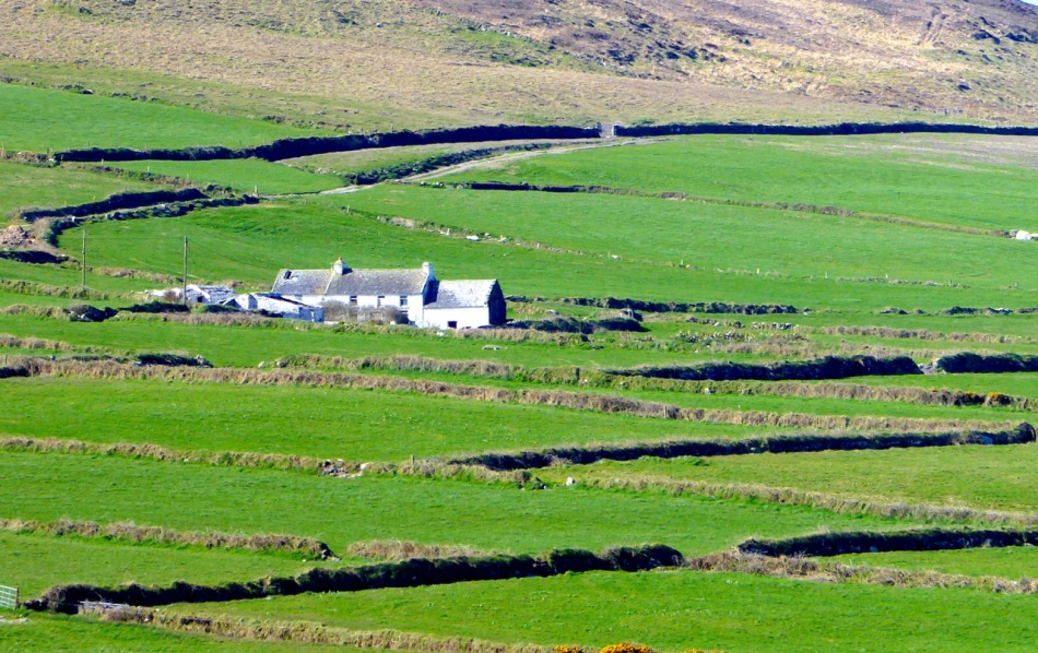 Mizen farm