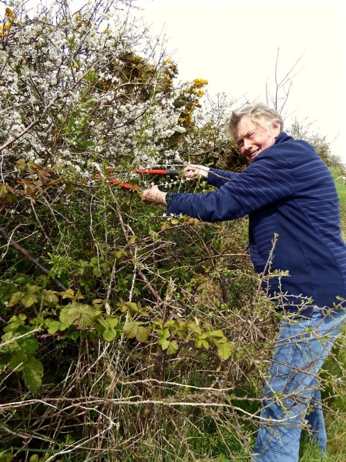 Cutting the sprays for our May Bush