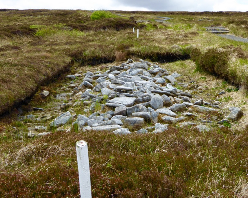 Collapsed field walls under the bog. The white stakes mark the line of the uncovered wall