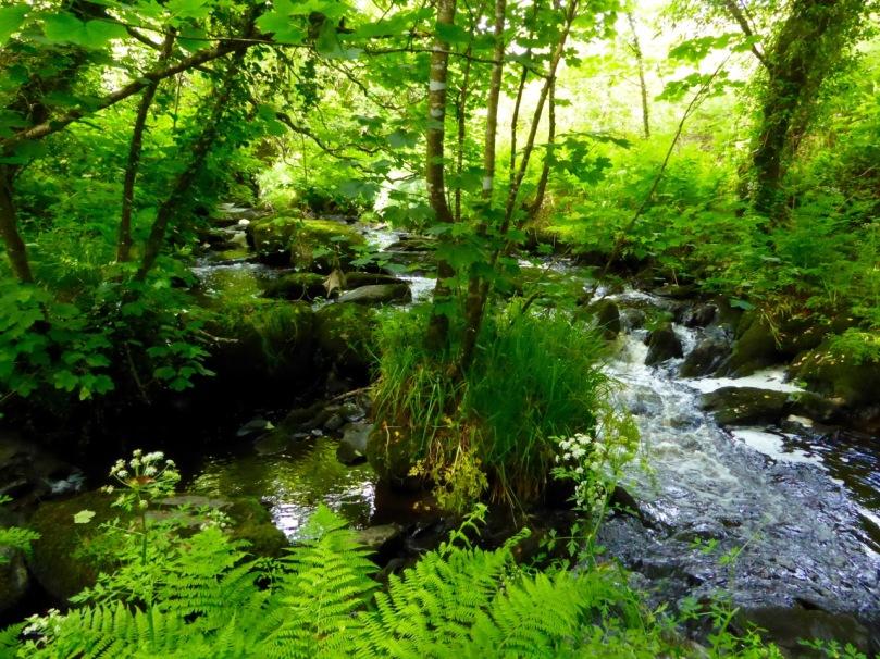 Roaringwater River, Lisheenacrahig Walk