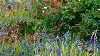 August hedgerow