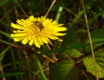 Bee on hawkbit