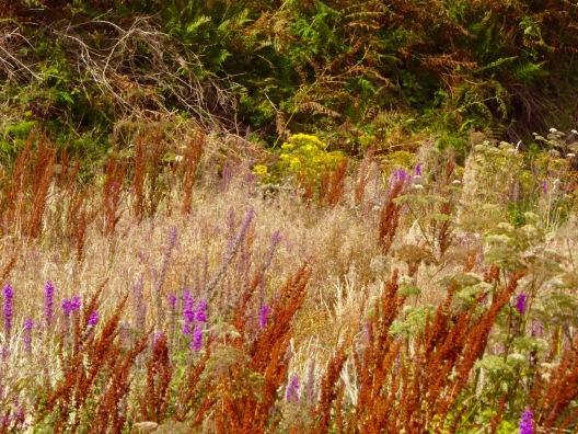 grasses etc