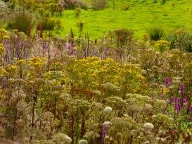 hogweed and ragwort