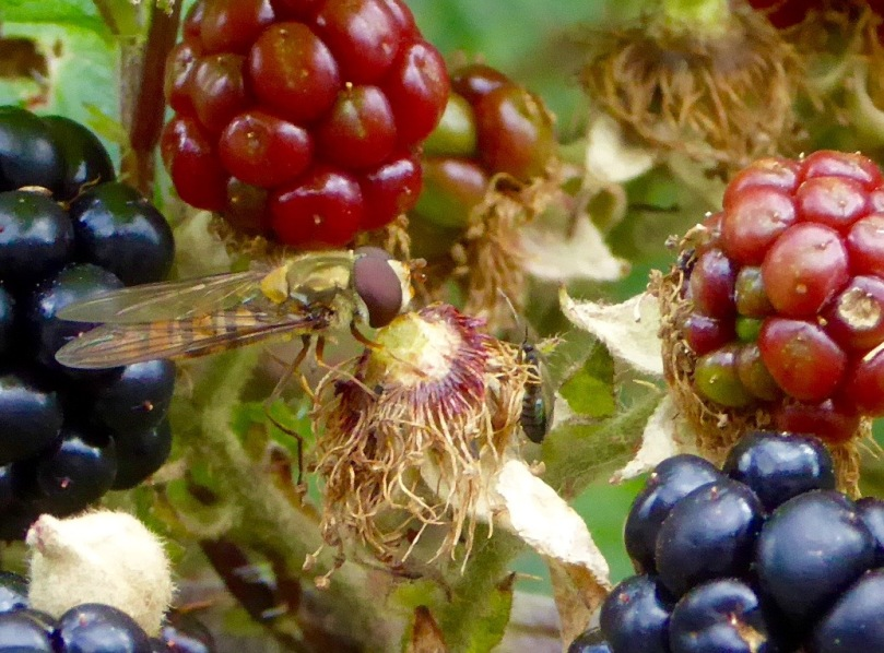 FLY ON BLACKBERRY