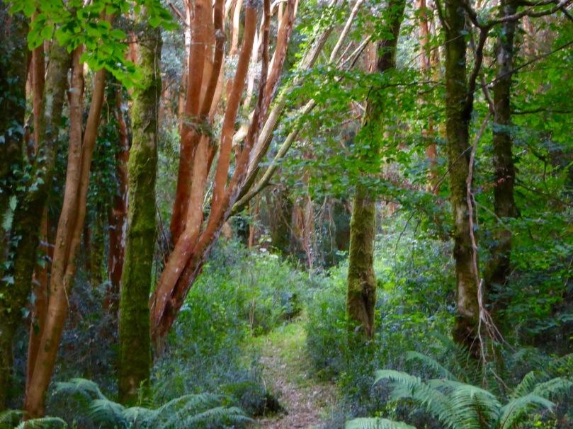 Myrtle Woods Path