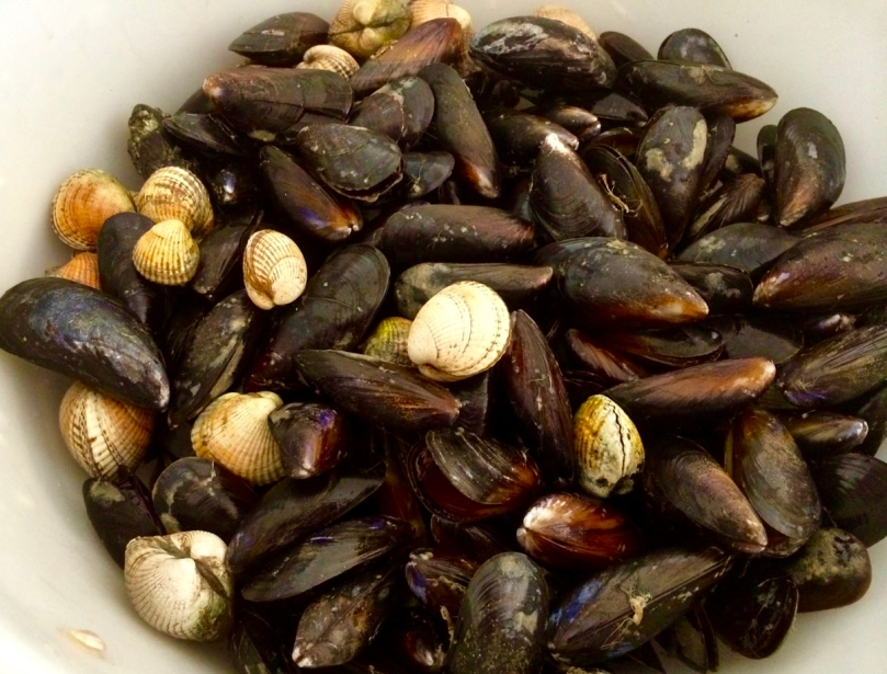 feast of mussels