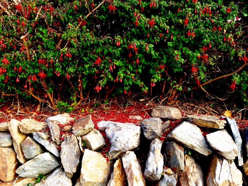 hedge and wall