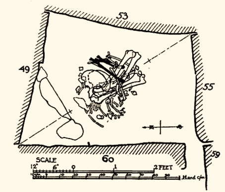 drawing of skeleton
