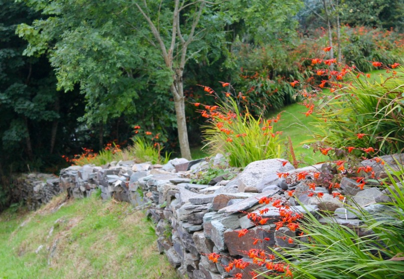Rock wall with Montbretia