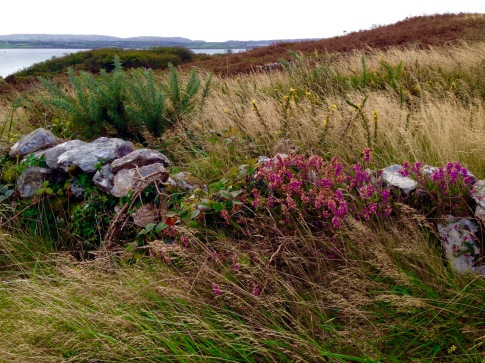wall and heather