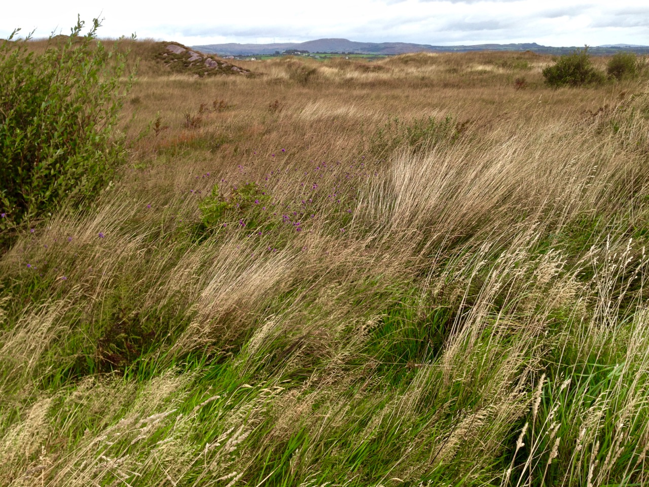 Rossbrin cove roaringwater journal for Wild grass landscaping