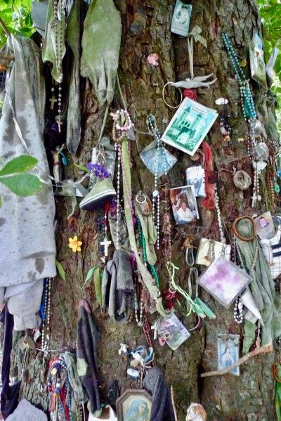 Brendan's tree 2