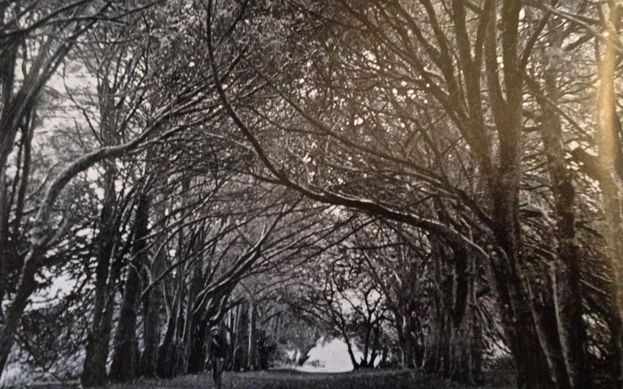 Clonfert, Yew Walk