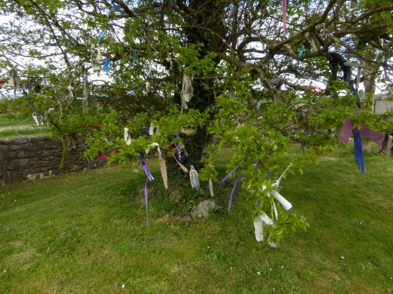 Inghne Buidhe rag tree
