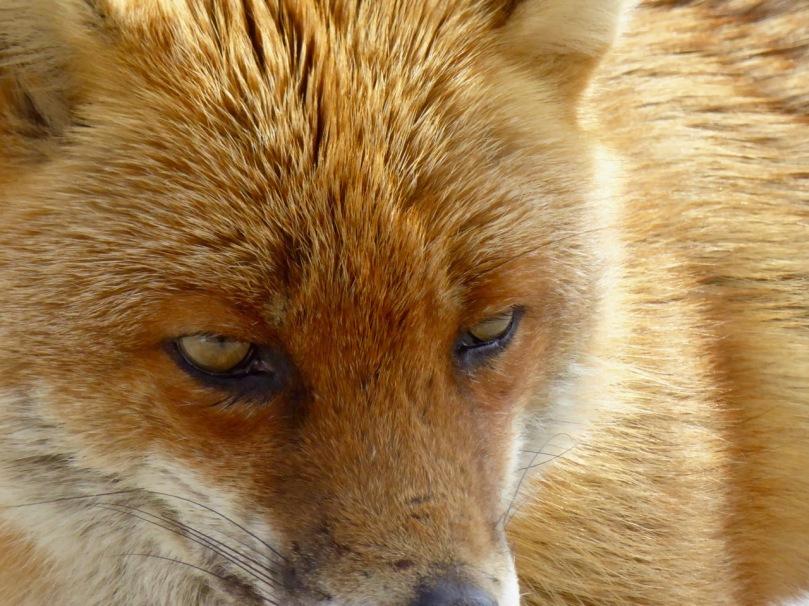Ferdia's Eyes