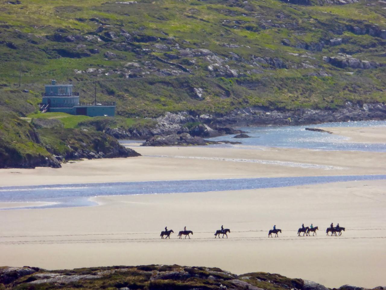 Horses at Caherdaniel