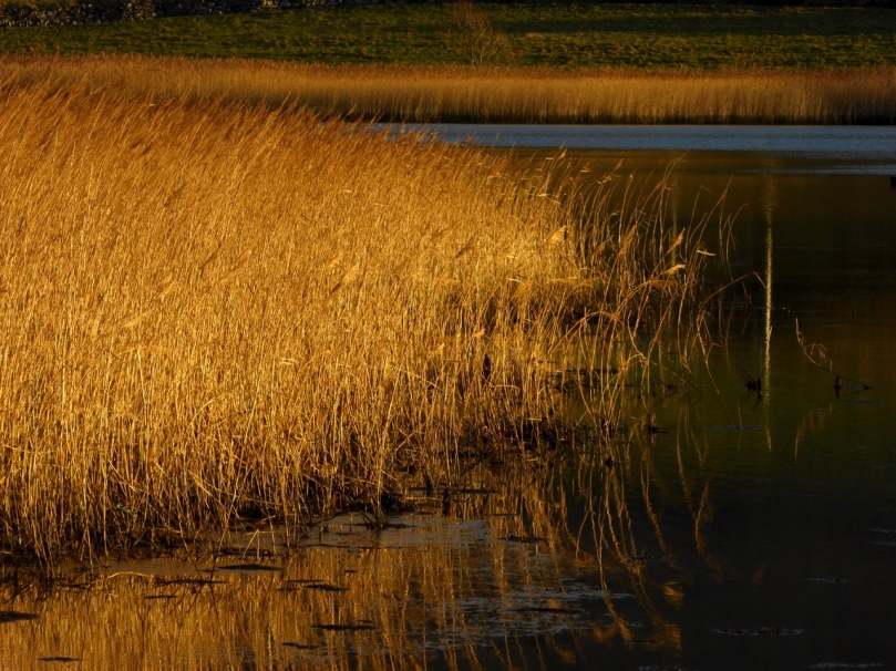 Barleycove Wetlands