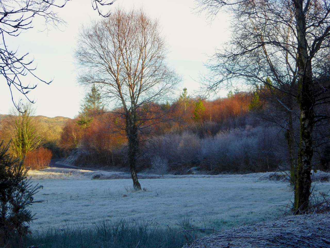 Sunshine and Frost, West Cork