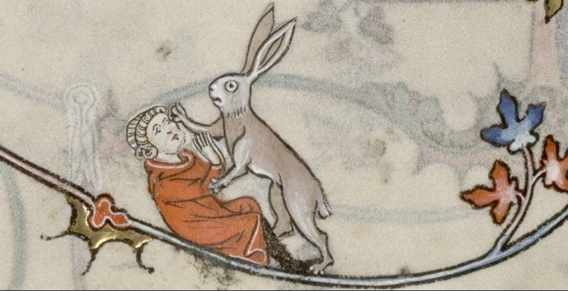amorous hare