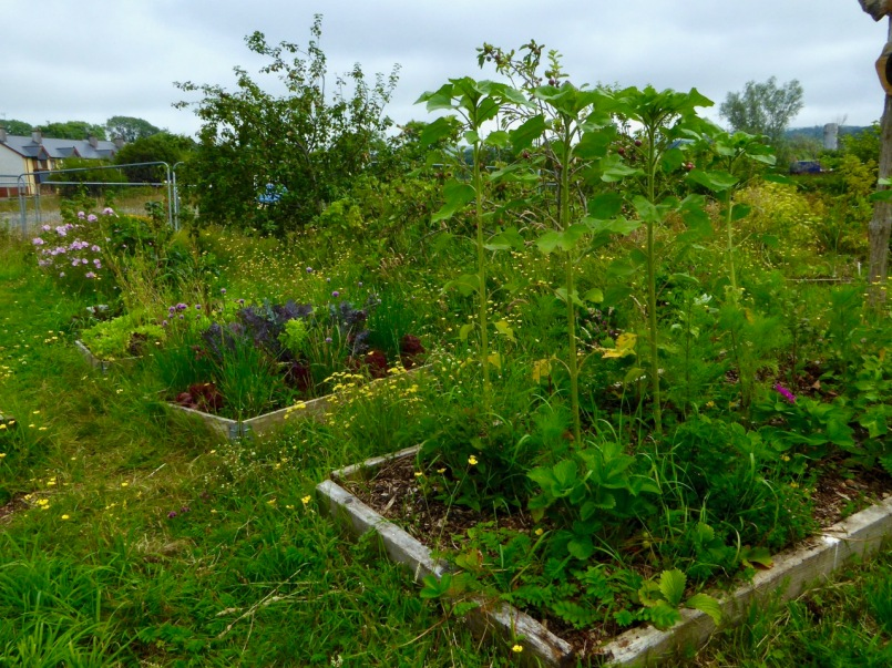 Community Orchard beds