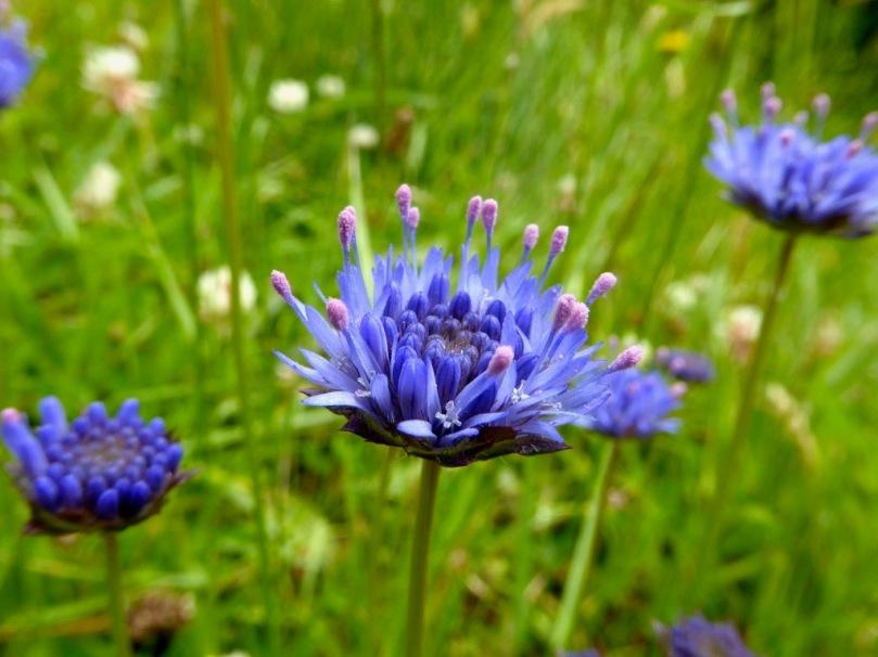 West Cork Wildflowers Roaringwater Journal