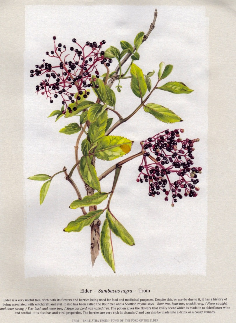 Botanical Art Roaringwater Journal